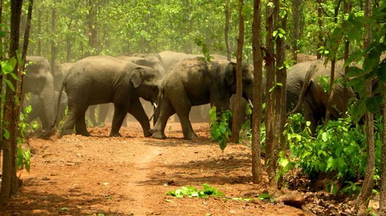 Top Elephant Safari Tours in India